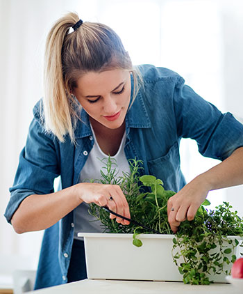 A person trimming herbs from a small, indoor planter box