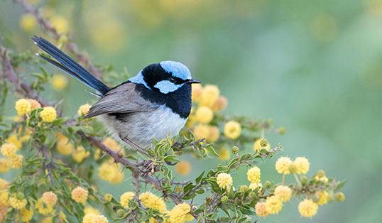 Five ways to protect urban wildlife