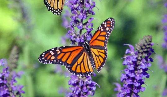 Virtual garden assessments nurture wildlife and wellbeing
